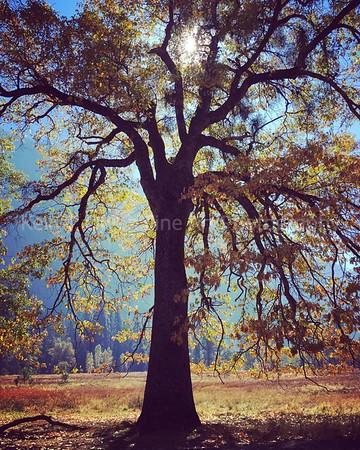 Fall in the Sierras