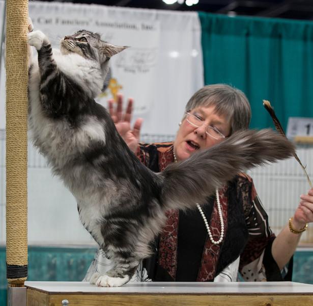 CatShow2014198.jpg