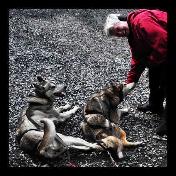 Seavey's Huskies - Alaska - 2013.JPG
