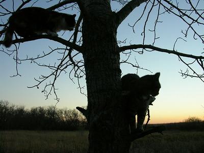Cats Moby & Mojo