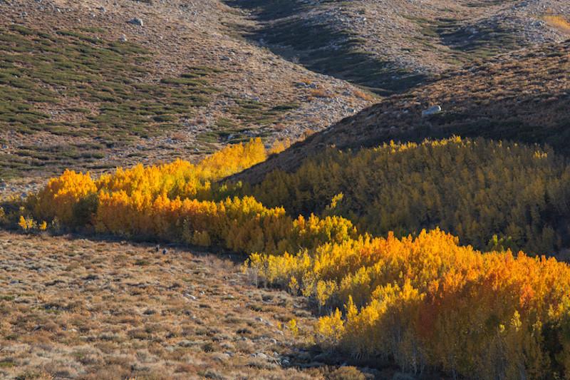 oct 18 - sierra creek road.jpg