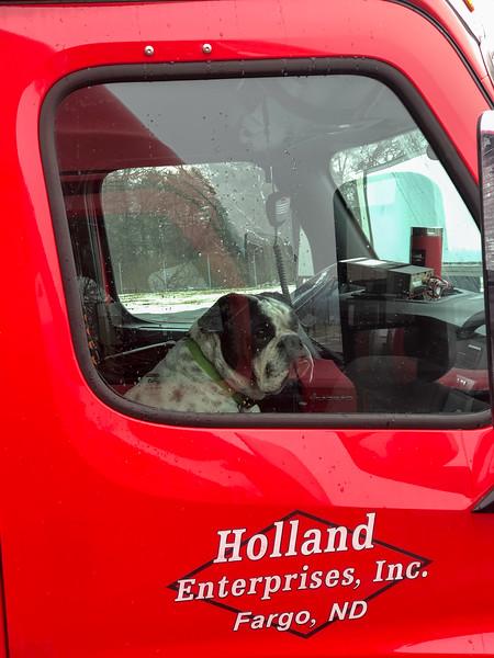 Driver's Dog Womelsdorf, PA