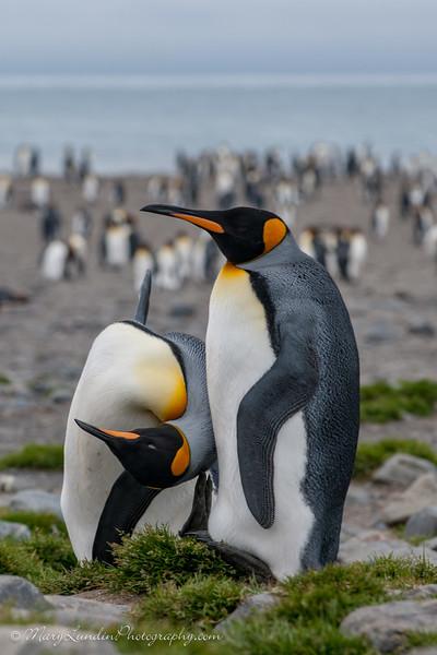 Antarctic-170