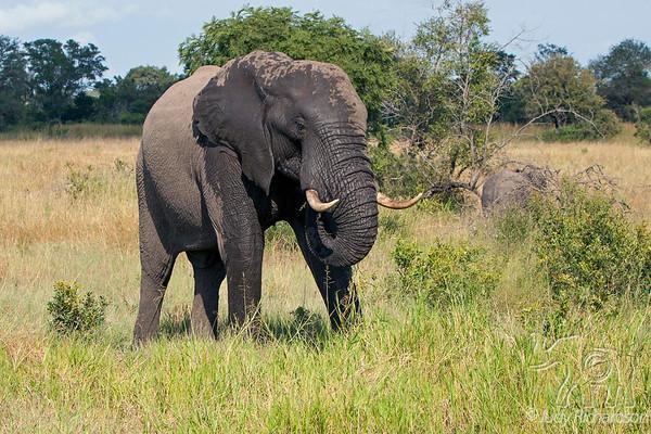Elephants ~ 2014
