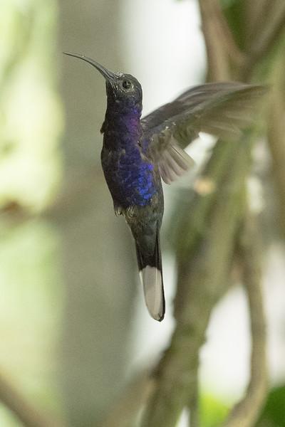19-Sept Costa Rica Birds-2010.JPG