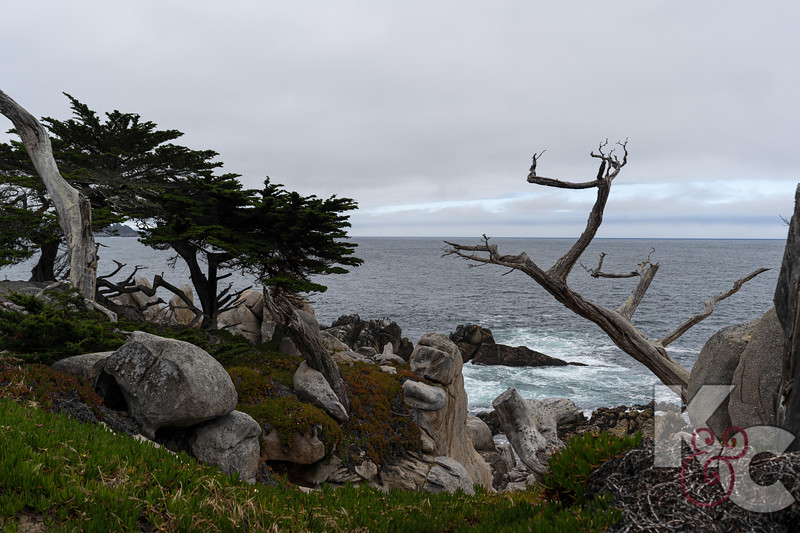 Along 17-Mile Drive at Pebble Beach