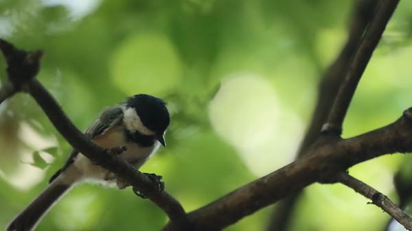 21 August 2021 Falaise Birds