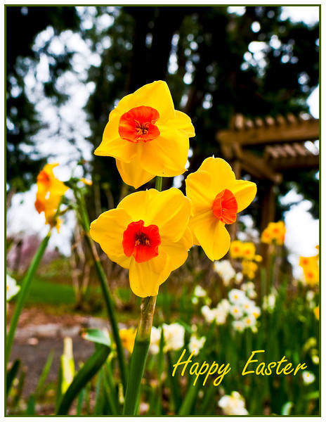 easter lily 2.jpg