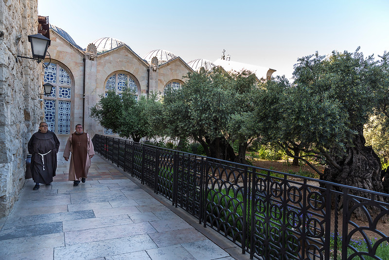 The Garden of Gethsemane, adjacent to the Church of the Nations near the foot of the Mount of Olives, is named in the New Testament as the place where Jesus went with his disciples to pray the night before he was crucified.  Research reported in 2012 showed that three of the eight ancient trees (the only ones on which it was technically possible to carry out the study) dated from the middle of the 12th century, and all eight originated as cuttings from a single parent tree. The Gethsemane olives are possibly descendants of one that was in the garden at the time of Christ. This is because when an olive tree is cut down, shoots will come back from the roots to create a new tree.