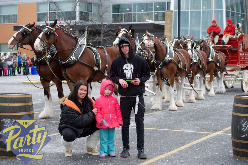 Clydesdale Portraits 4.jpg