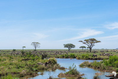 Masses in the Serengeti