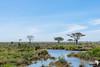 Masses in the Serengeti