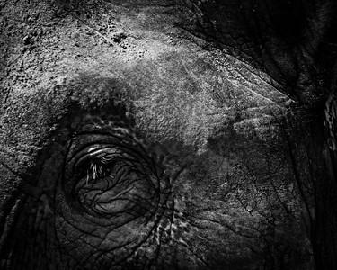WildLife - Sri Lanka 2017
