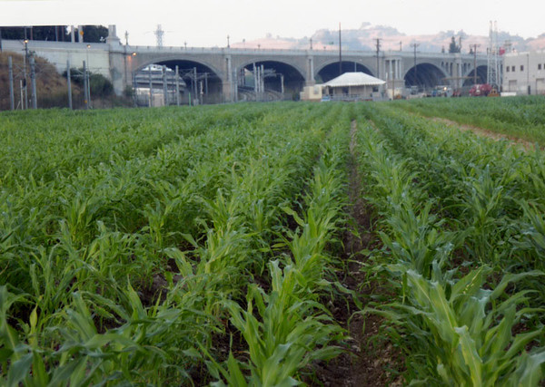 2005, Corn and Bridge