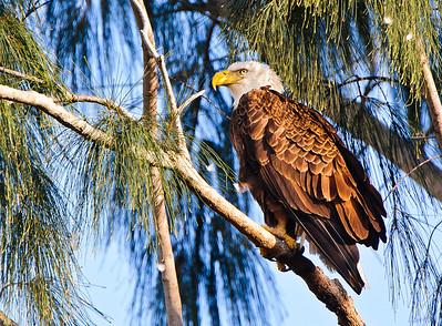 Eagle (Florida)