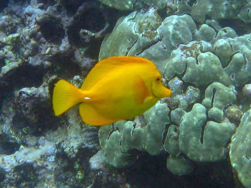 497- 20080416- Hawaii 20-Snorkelling IMG_0724.jpg
