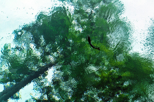 Florida Springs 2009
