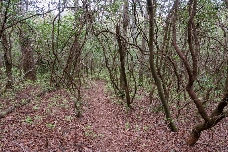 Interim Access Trail -- 2,580'