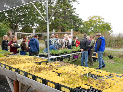 Fall Native Plant Sale 2018