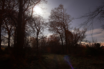 Night Photography, Bluebell Woods and Near Brownside Farm