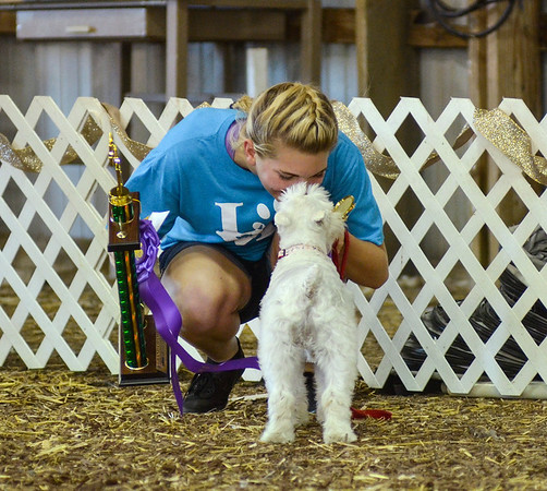 4-H Dog Club Obedience and Agility Demo