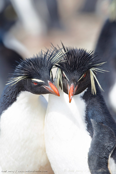 South Georgia Island and the Falklands- in benefit of the South Georgia Heritage Trust