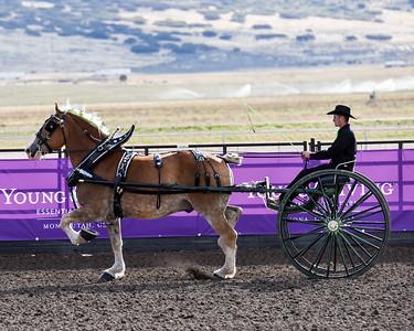 Amateur Cart