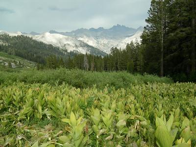 Alta Peak July 2007