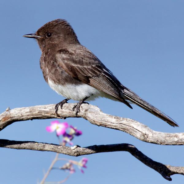 bird  10117.jpg