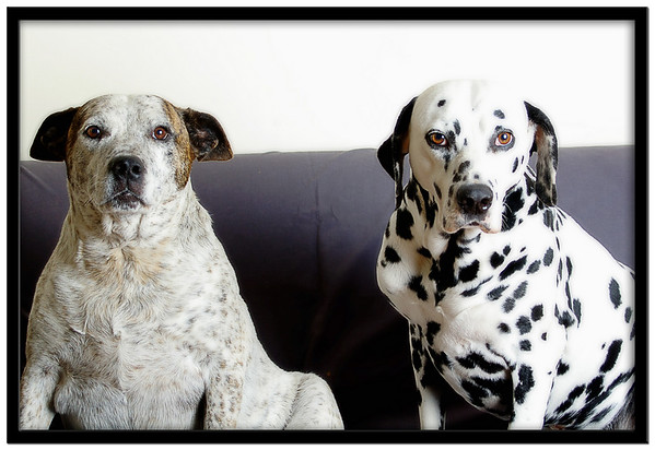 Spotty dogs!