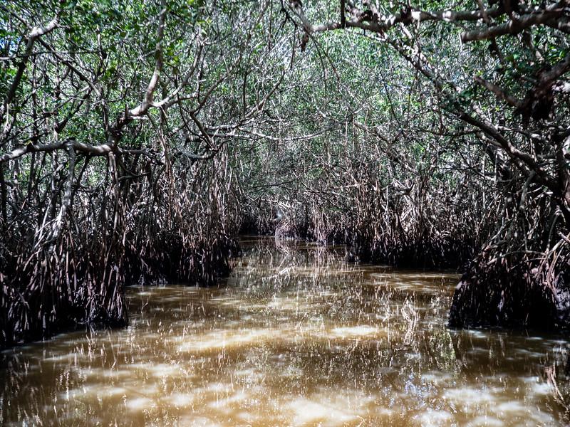 Everglades-50.jpg