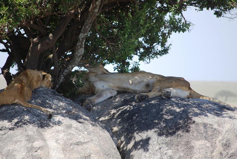Serengeti (184).JPG