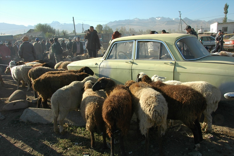 Karakol Animal Market, Sheep - Kyrgyzstan
