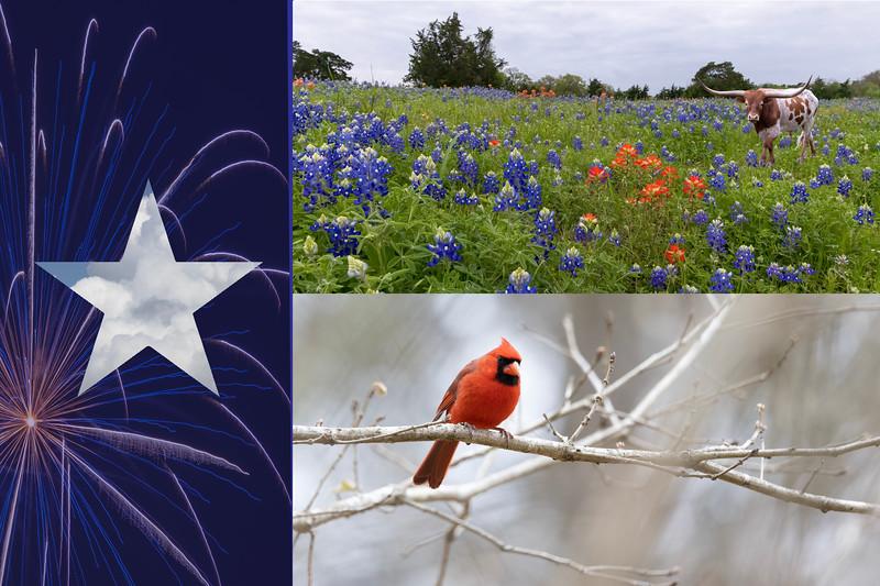 Texas Flag with longhorn and cardinal.jpg