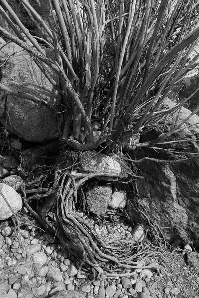 Alluvial Fan, Rocky Mountain National Park, CO