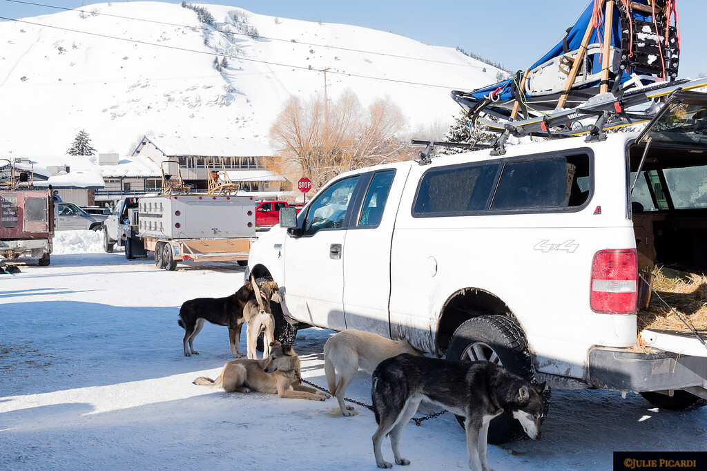 This musher uses all breeds plus mixed rescue dogs on his team.