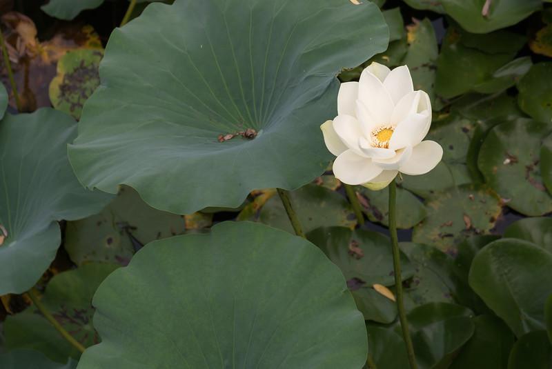 Ilsan Lake Park, Seoul.