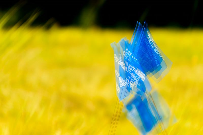 20140719 Blue Flags-0543.jpg