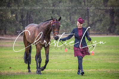 SPPHAWA Autumn Show 22nd May 2017: Halter