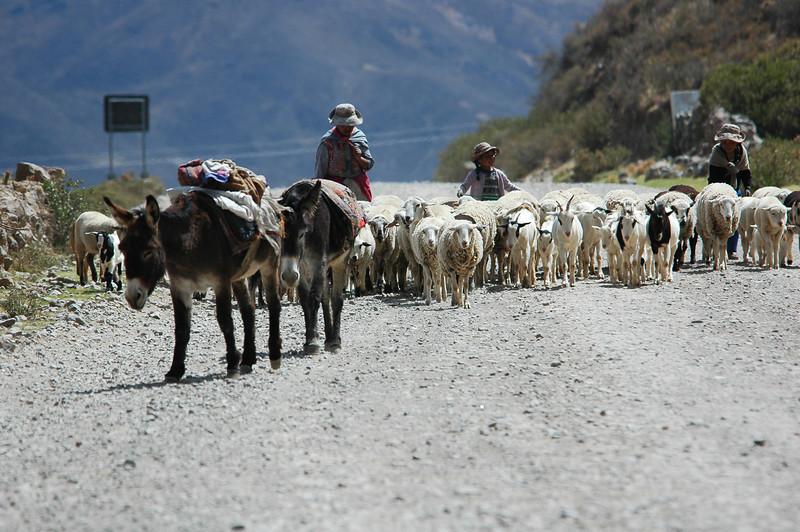 Peru Ecuador 2007-051.jpg