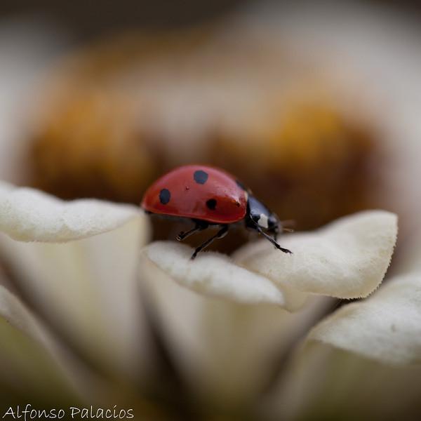 20100918 Lady Bug-0006.jpg