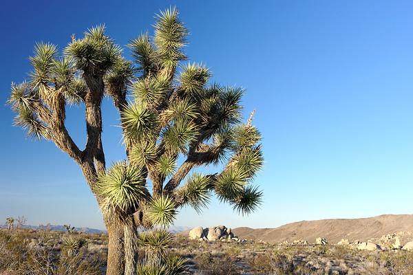 Joshua Tree, CA (29 Images)