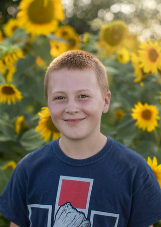 McCollum Sunflowers