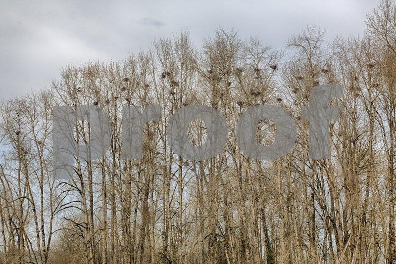 GB heron rookery, Woodland  3166_HDR.jpg