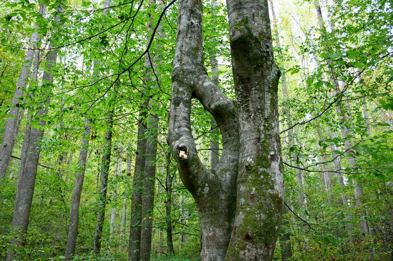 Pisgah Forest 9-30-12 87.jpg