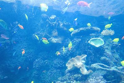 Georgia Aquarium 06-06-09
