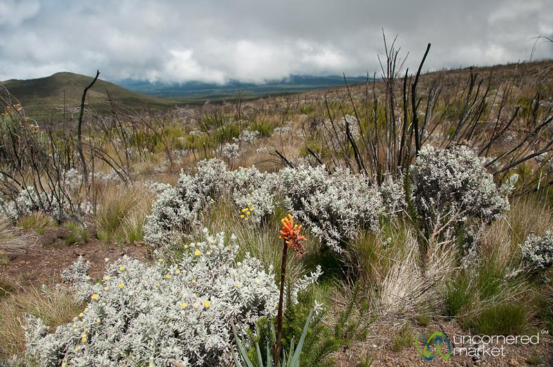 Wildflowers at Mt. Kilimanjaro, Tanzania