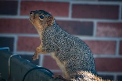 2016-11-12 - Squirrel