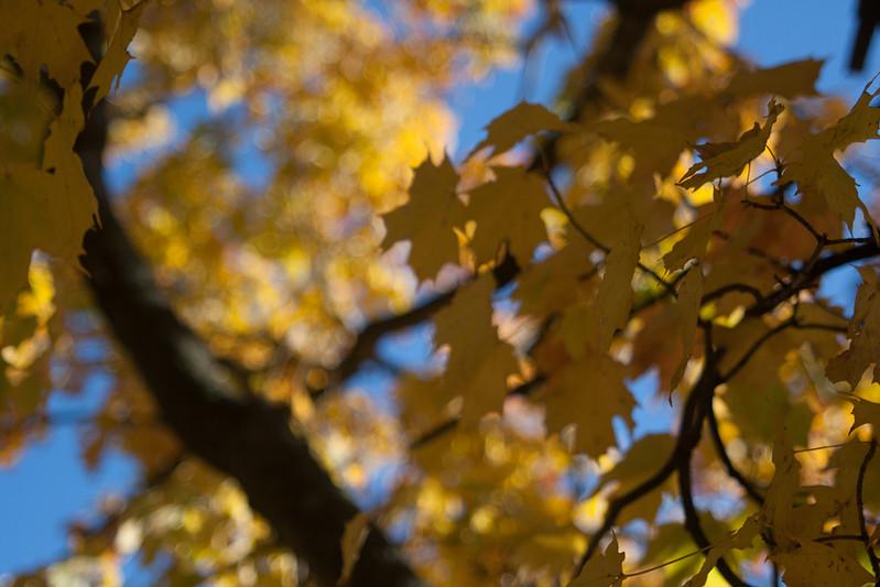 20121021-2012-10-2116-27-4313215.jpg