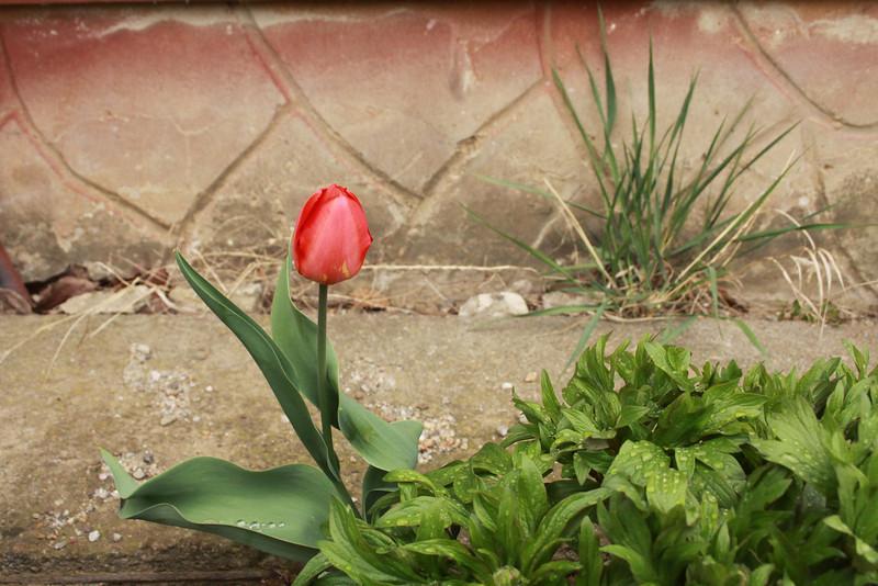 Visit Carei Easter 2012 - Wineyard